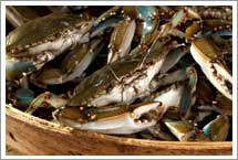 Wholesale Crab Meat