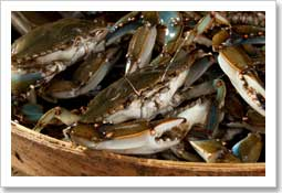 Wholesale Blue Crab Products